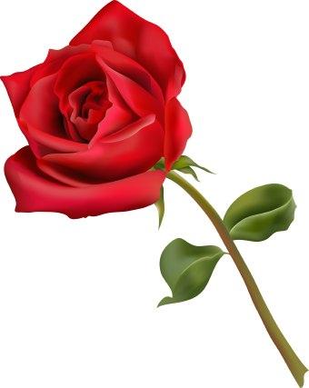 Rose-flower-clip-art-9edR1a-clipart